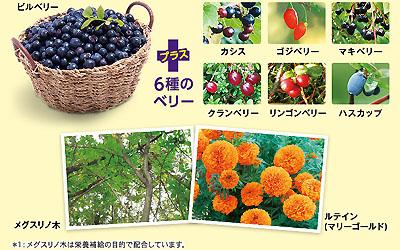 小林製薬 ブルーベリー&メグスリノ木EX